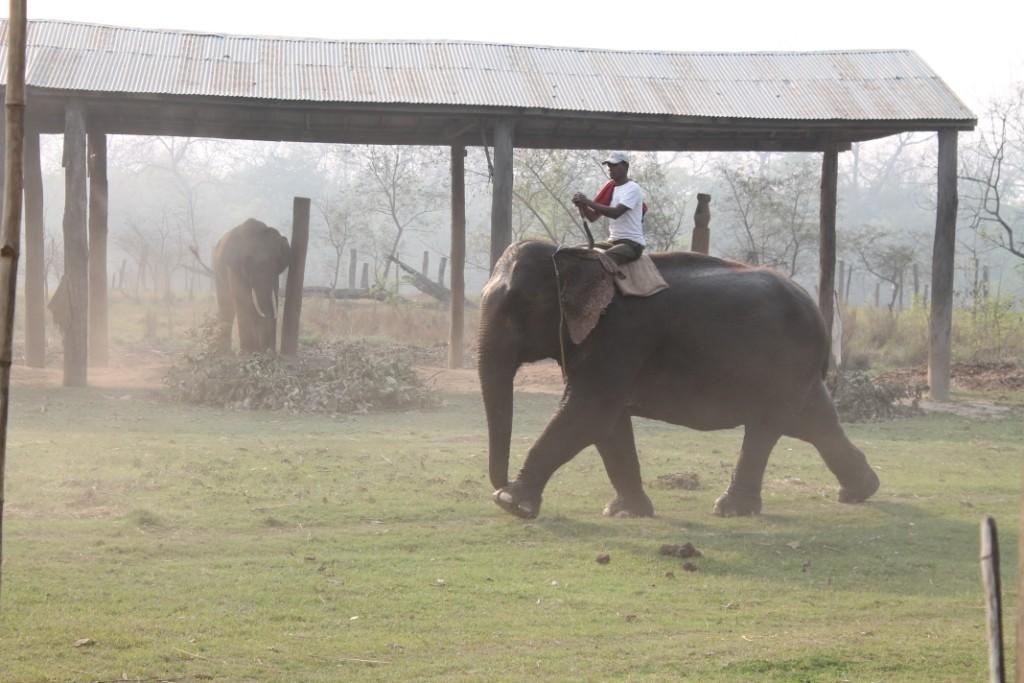 Die Elefanten kamen gerade aus dem Dschungel vom Blätter- und Grasschneiden.