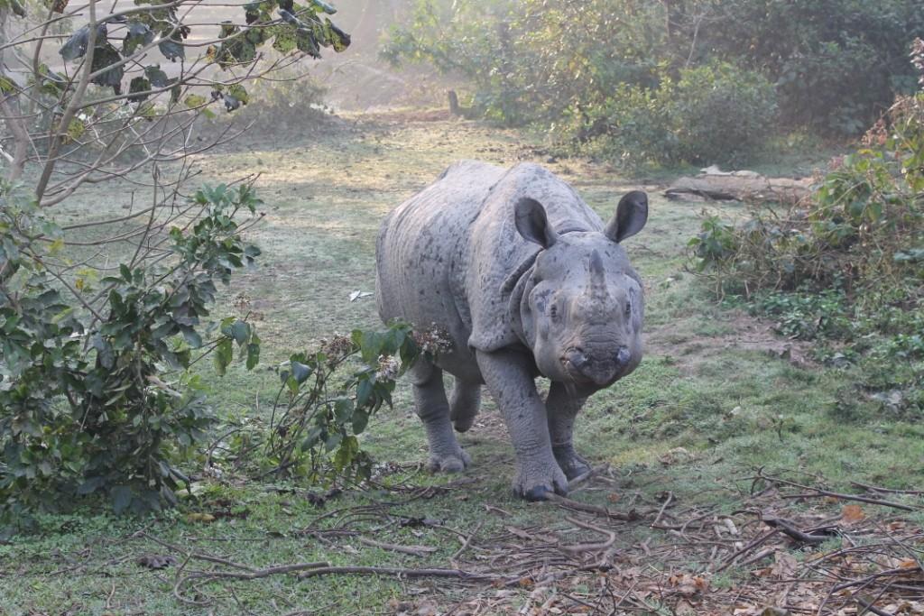 Auch hier haben wir ein Nashorn begutachten können, allerdings kein freilebendes.
