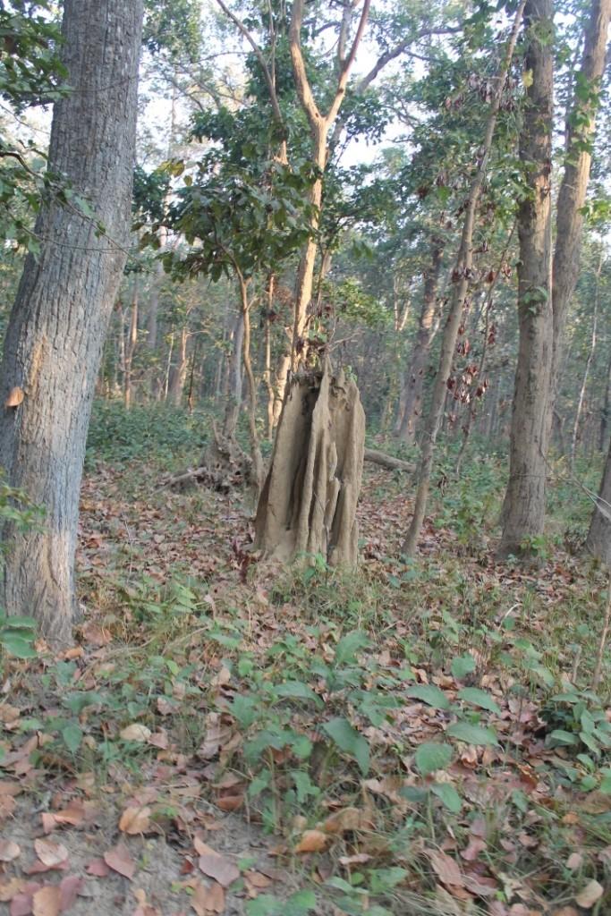 Auch hier gibt es wieder einige Termitenhügel, die nochmal ein Stück größer als in Chitwan waren.