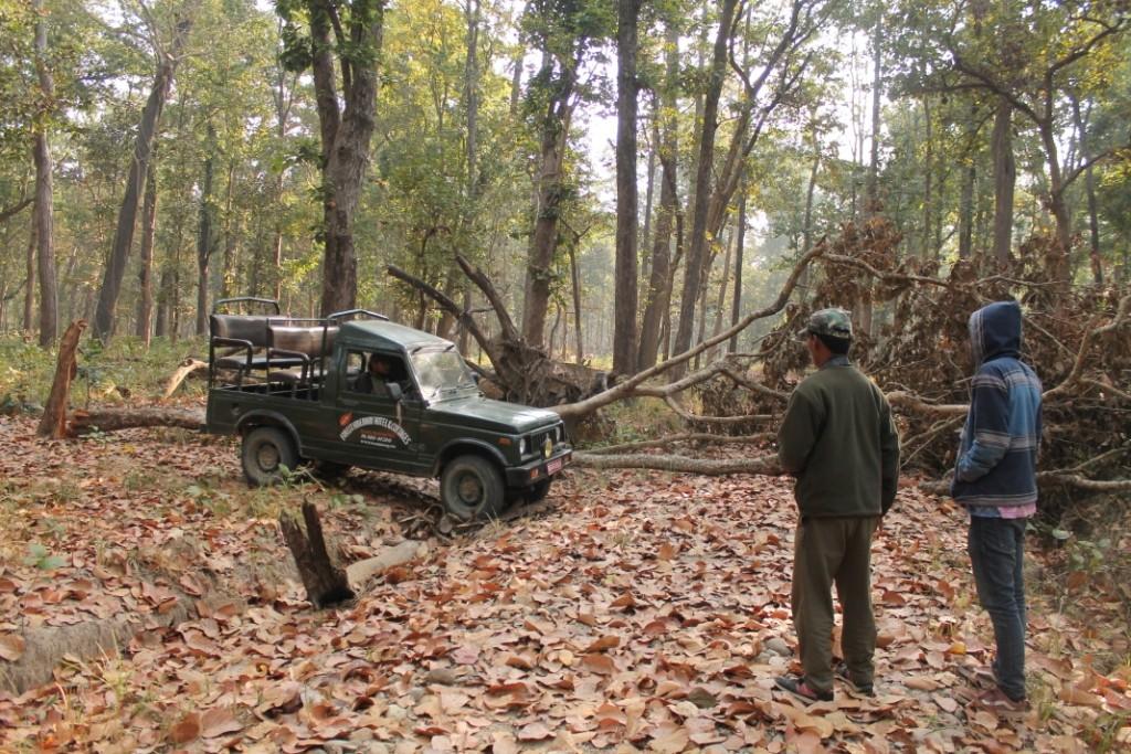 Da ein Baum an einer Stelle über den Weg gefallen war, mussten wir den Graben neben dem Weg mit Hölzern und Steinen ausfüllen, sodass unser Jeep darüber und durch den Wald einmal um den Baum fahren konnte.