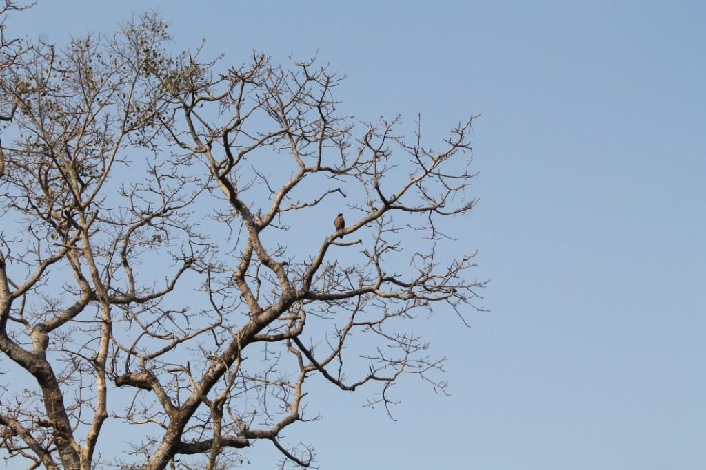 Und auch ein Adler saß majestätisch im Baum.