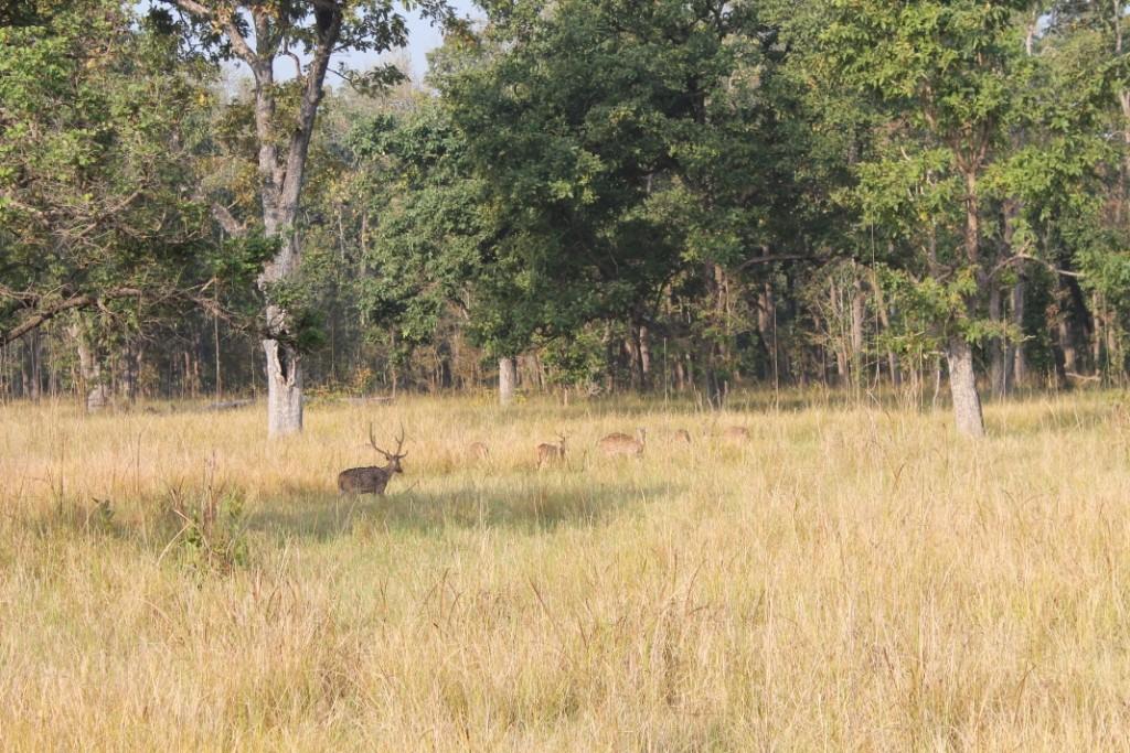 Doch die meist gesichtesten Tiere waren mit Abstand Rehe, von denen es fünf Arten im Park gibt.