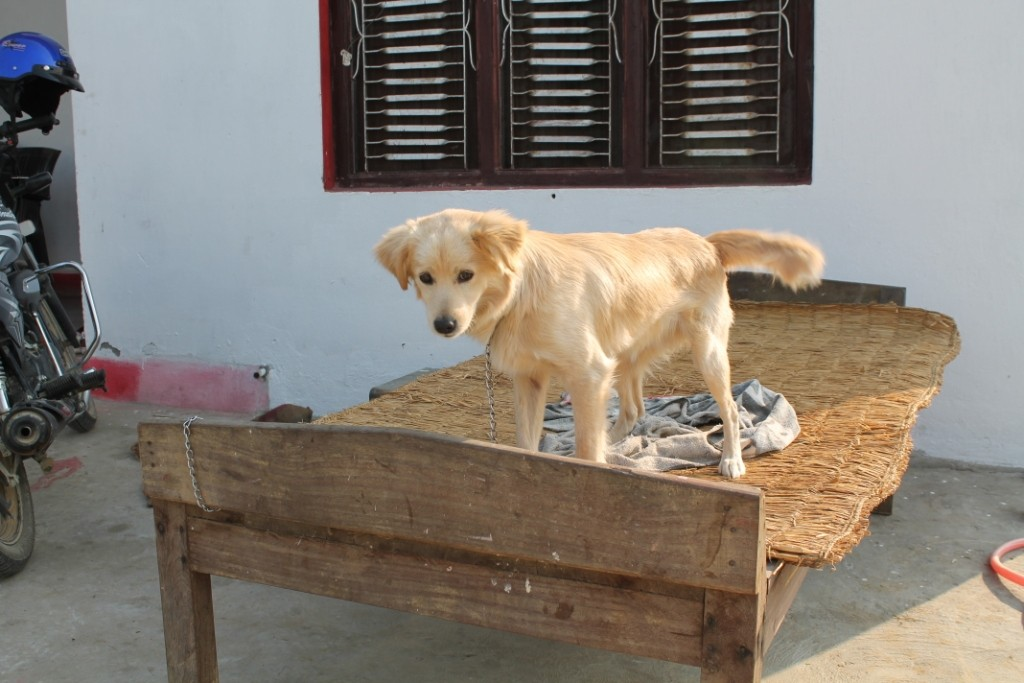 Einen Hund hatten wir auch, den kleinen Bobbi:)