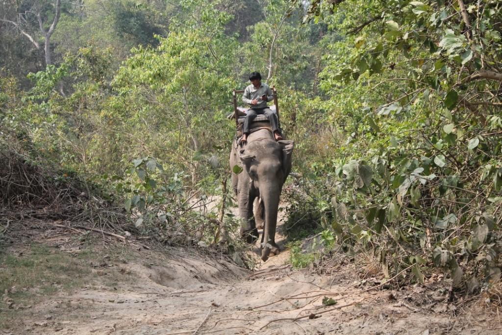 Nach dem Mittagessen kam er aber dann doch noch: unser Elefant.