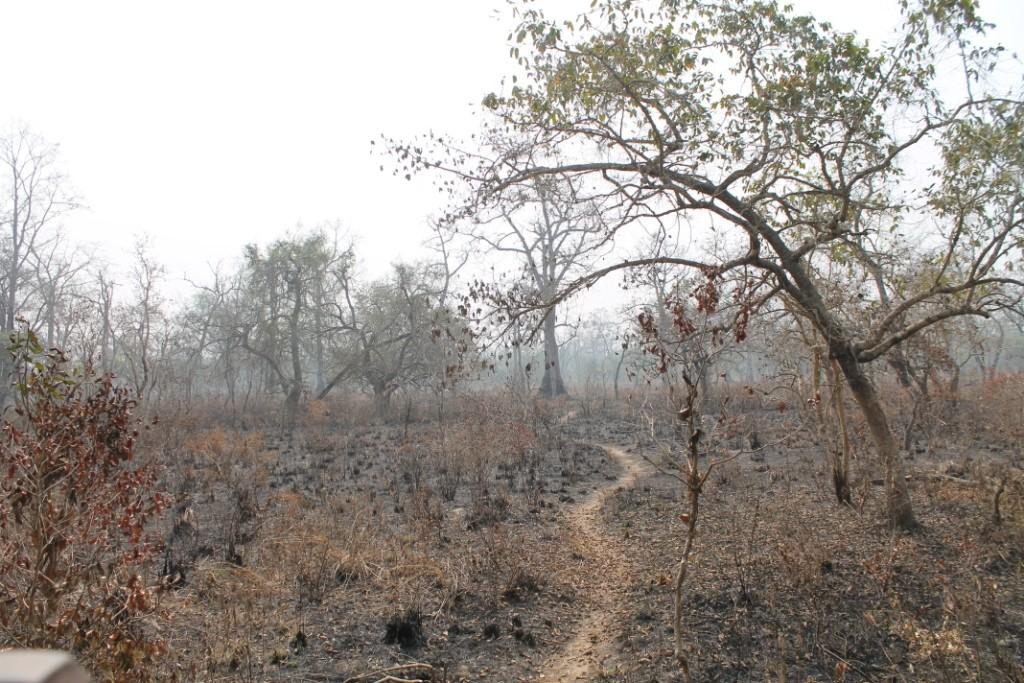 ...und mal so als hätte es vorher gebrannt. Die Pflanzen haben sich aber alle paar Meter verändert, was unglaublich interessant war.