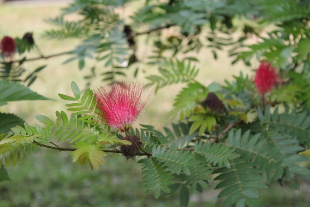 Und auch sonst gab es viele ausgefallene Blüten im Park.